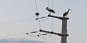SEDAŞ,kuşların güvenliğini sağlamak için çalışmalarını sürdürüyor