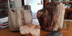 Türkiye'deki fosil ağaç kalıntıları 160 milyon yıllık