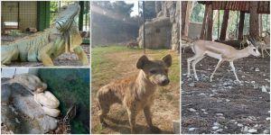 Tarsus Hayvanat Bahçesine 57 yeni üye