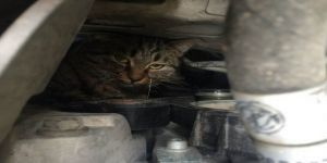 Gebze'de otomobilin motor kısmına yavru kedi sıkıştı