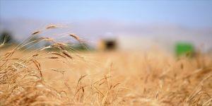Terör örgütü YPG/PKK ve Esed rejiminin buğday kavgası sürüyor