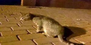 Dilovası'da bir araç kediye çarparak kaçtı