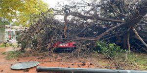 Kocaeli'de otomobilin üzerine ağaç devrildi !