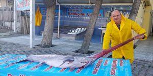 Marmara Denizi'nde 3 metre uzunluğunda kılıç balığı yakalandı