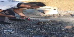 Darıca Da Çukura düşen kaplumbağa Kurtarıldı  Video