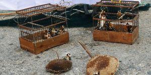 İzmit'te yasaklı kuş besleyen şahısa para cezası