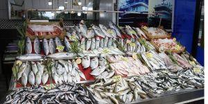 Bandırma ve Çanakkale'de balıkçıların yüzünü palamut güldürdü