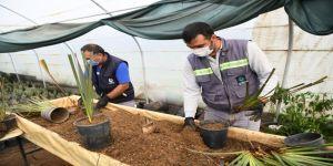 Serada bitki üretimi