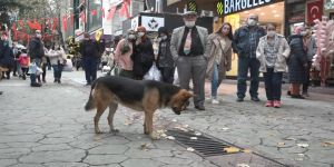 Sokak köpeğinin şüpheli hareketi itfaiye ekiplerini harekete geçirdi