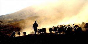 Küçükbaş hayvancılıkta sürü büyütmeye ve çoban istihdamına 239,5 milyon lira destek