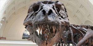 Dinozor nüfusunun Dünya'ya asteroit çarpmadan önce azalmadığı ileri sürüldü