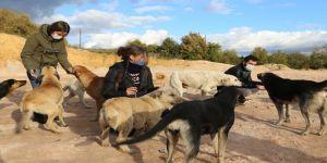 """""""Sokak köpekleri için mama, gıda, onları tedavi ettirecek kaynak bulamıyoruz"""""""