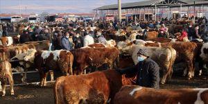 Türkiye'nin 'en büyük' canlı hayvan pazarı perşembe günleri kurulacak