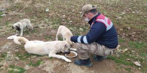 Elazığ'da sokağa çıkma kısıtlamasında sokak hayvanlarına mama verildi