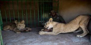 Sudan'da gönüllülerin açtığı bakım merkezinde yabani hayvanlar hayat buluyor