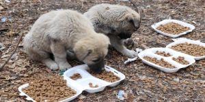 Kızılay gönüllüleri Kovid-19 kısıtlamasında sokak hayvanlarını unutmadı