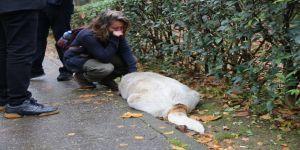 Savcılıktan köpek katliamı ile ilgili açıklama