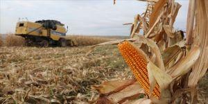 Şanlıurfa'da 2 milyon tonluk mısır rekoltesi beklentisi