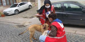 Türk Kızılay gönüllüleri, sokağa çıkma kısıtlamasında sokak hayvanlarını unutmadı