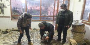 Köpek saldırısına uğrayan karaca tedavi altına alındı