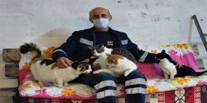 Sokak kedileri için koltuklu, televizyonlu 3+1 ev yaptı