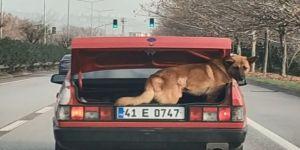 Köpeği bagajda taşıdı, hayvanseverler tepki gösterdi