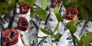 Samsun'dan yıllık 20 milyon dolarlık balık ihraç ediliyor