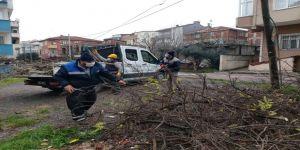 Darıca'da mevsimsel ağaç budama çalışmaları devam ediyor