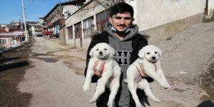Çorum'da sosyal medyadan yapılan çağrıyla korumaya alınan 7 köpek sahiplenildi
