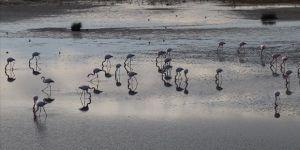 Hersek Lagünü yılın her döneminde göçmen kuşları ağırlıyor
