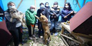 Gönüllü kadınlar sokak hayvanları için 'marangoz' oldu