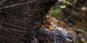 Çocukluğundan gelen tutkuyla yaban hayvanlarını doğal yaşamlarında görüntülüyor