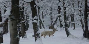 Ormanya'da kar ziyaretçiler için 'eğlenceye' dönüştü