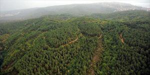 Türkiye'nin orman varlığını artırma ve ağaçlandırmadaki başarısı BM tarafından da tescillendi