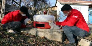 Elazığ'da Genç Kızılay gönüllüleri, topladıkları atık araç lastiklerini soğuktan etkilenen kediler için yuvaya dönüştürüyor.