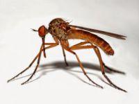 Sivrisinekler en çok kimi ısırıyor