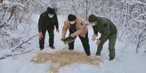Karabük'te yaban hayvanları için doğaya yem bırakıldı