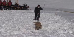 Arama kurtarma köpeği 'Girgin' jandarmaya hayat kurtaran operasyonlarda güç katıyor