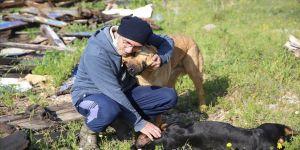 Bodrumlu avukat sokak hayvanları için 'iyilik mesaisi' yapıyor