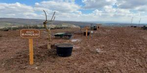 Sağlık çalışanlarının 2 bin 500 fidanlı meyve ağacı ormanı oldu