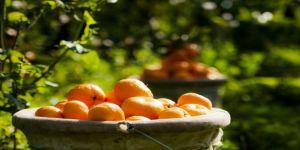 Kalıntısız meyve sebze üretmek için Tarım ve Orman Bakanlığı ve ihracatçı güç birliği yapacak