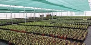 Yaşam Bahçesi, faaliyete geçmek için gün sayıyor