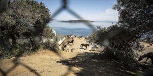 'Adalar'daki atlar' sorunu hayvanseverlerin çabalarına rağmen çözüme kavuşturulamadı