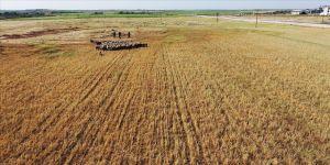Güneydoğu Anadolu ve Konya Havzası'nda meteorolojik kuraklık yerini tarımsal kuraklığa bıraktı