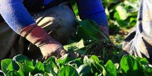 Tarım ve Orman Bakanlığı 1000 kadın girişimciye eğitim vermeyi hedefliyor