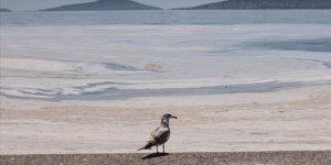Kocaeli kıyılarında müsilaj görülmeye devam ediyor