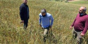 Doludan tarlaları zarar gören çiftçilere destek