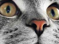 Dışişleri Bakanlığı kadroya kedi aldı!