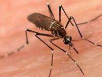 Sivrisinekten Kaptığı Parazit Hayatını Kararttı..