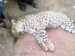 Leopar katiline 5 yıl hapis istendi